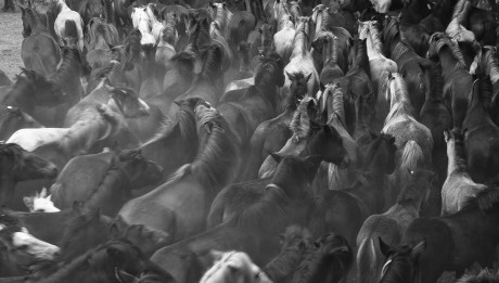 A Rapa das Bestas 01 - José Meis